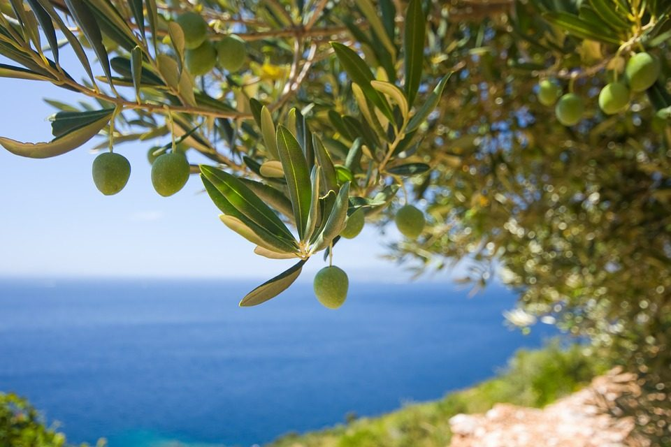 The Extra Virgin Olive Oil from Creteis one of the highest quality extra virgin olive oils in the world, being Crete one of the most important producers.