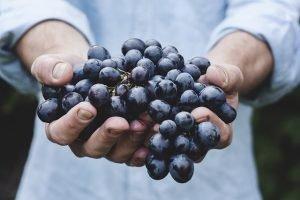 Tasting Cretan Wines
